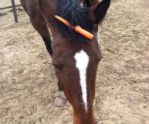 carrot, Clueless, and horse image