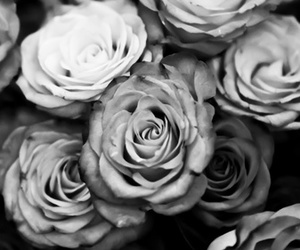 rose, flowers, and black and white image