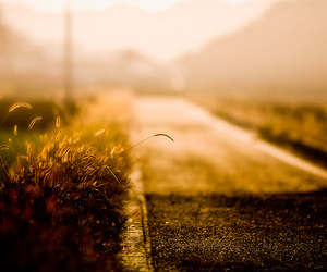 gold, road, and grass image