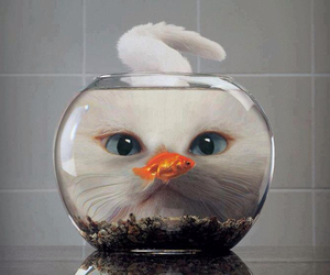 cat, fish, and funny image