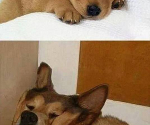 dog, funny, and sleep image