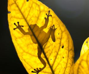 frog, animal, and leaf image