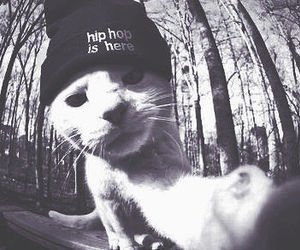 cat, hip hop, and swag image