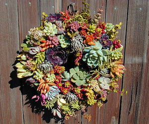 plants, wreath, and succulent image