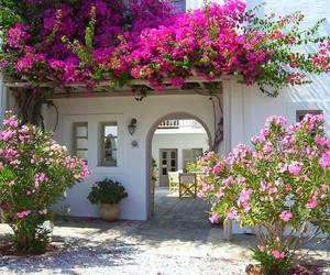 flowers, Greece, and santorini image