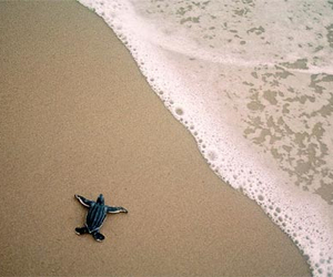 alone, ocean, and turtle image