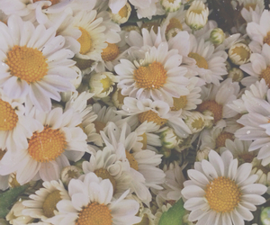 flowers, daisy, and sunflower image
