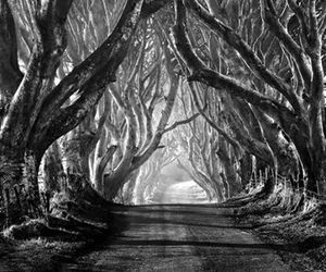 trees and black and white image