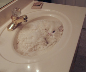 cat, cute, and toilet image