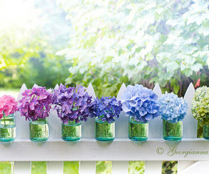 flowers, hydrangea, and photography image