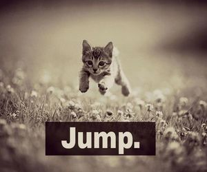 cat, jump, and cute image