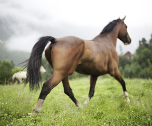 cheval and horse image