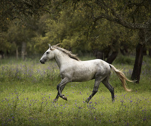 cheval, horse, and grey horse image