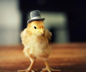 chicks, cute, and chicks in hats image