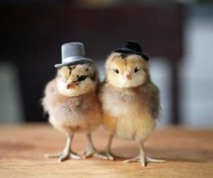 chicks, funny, and humour image
