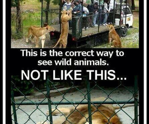 animal rights, animals, and zoo image