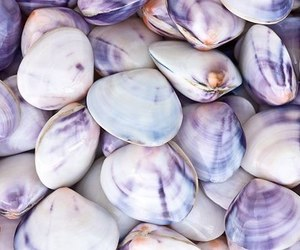 clams, nature, and pattern image
