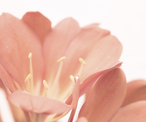 beautiful, flower, and pastel image