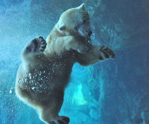 bear, animal, and water image