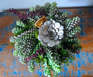 design, succulents, and flower image