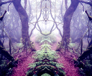 forest and fairytale image