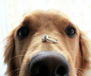 dog, ring, and animal image