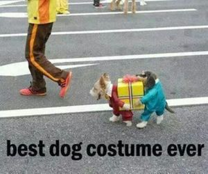 dog, costume, and funny image