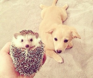 dog, urchin, and cute image