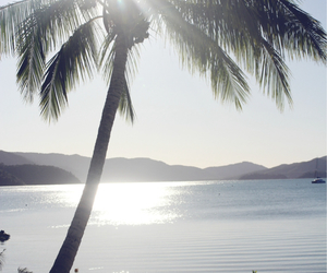 beach, palm tree, and Queensland image