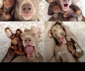 dogs, cute, and bestfriend image