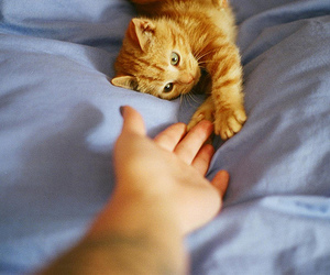 cat, cute, and hand image