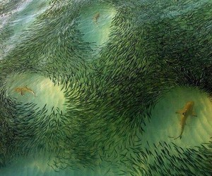 fish, shark, and sea image