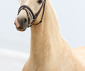 beauty, cutie, and horse image