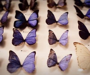 butterfly, vintage, and purple image