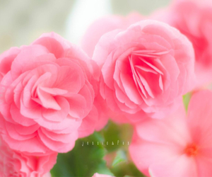 flowers, mother's day, and pink image