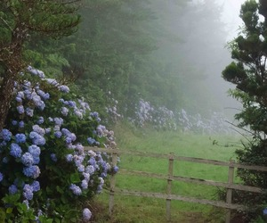 flowers, nature, and fog image