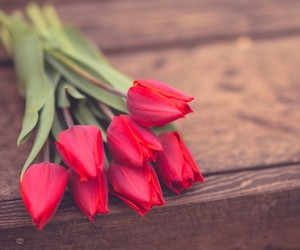 lovly, red, and spring image