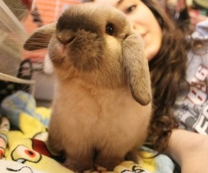 animal, bunny, and tumblr image