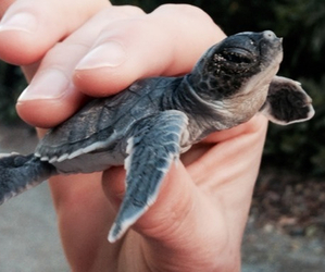 baby, seaturtle, and photography image