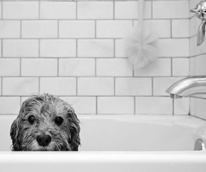 dog, cute, and bath image
