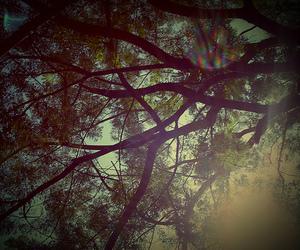 photography, tree, and sun image
