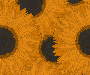 sunflower, background, and flowers image