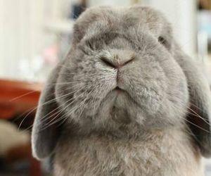 bunny and animal image