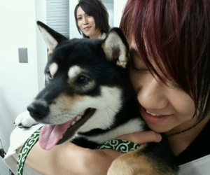 band, dog, and sug image