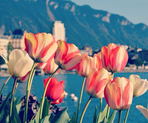 flowers, tulips, and day sky image