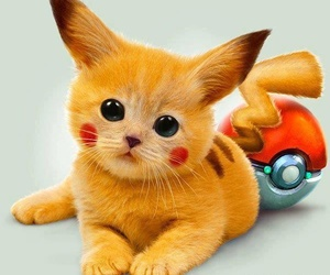 pokemon, cat, and pikachu image