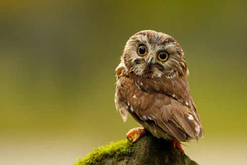 baby, green, and owl image