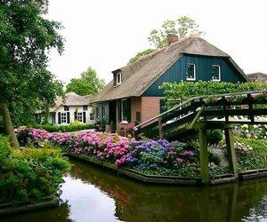 flowers, netherlands, and village image
