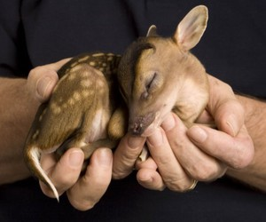 animal, young, and bambi image