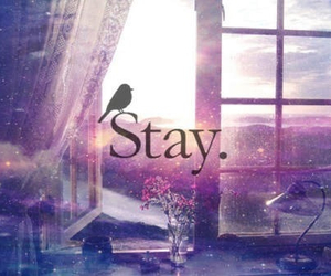 stay, bird, and quotes image